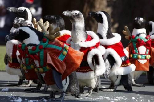 Quando il pinguino si veste da babbo natale animali nel for Animali a natale