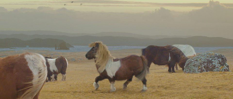 pony moonwalker
